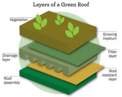 diagram showing layers of a green roof; vegetation, growing medium, filter layer, drainage layer, root resistant layer, roof assembly.